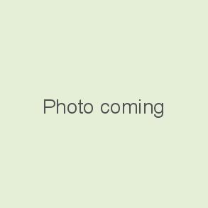 Osteospermum SYMPHONY