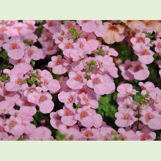 BreezeePlus Pink