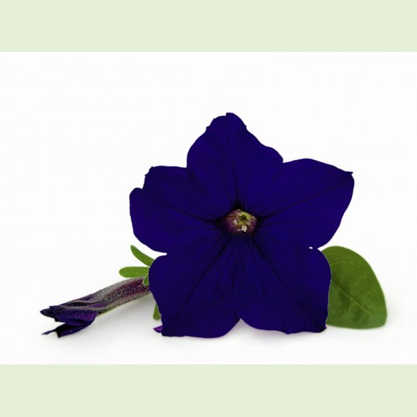 Veranda Dark Blue