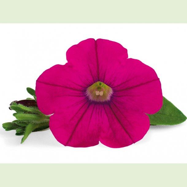Veranda Hot Pink