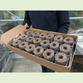Ellepot - til oppotning af dine småplanter